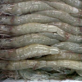 shrimp-min